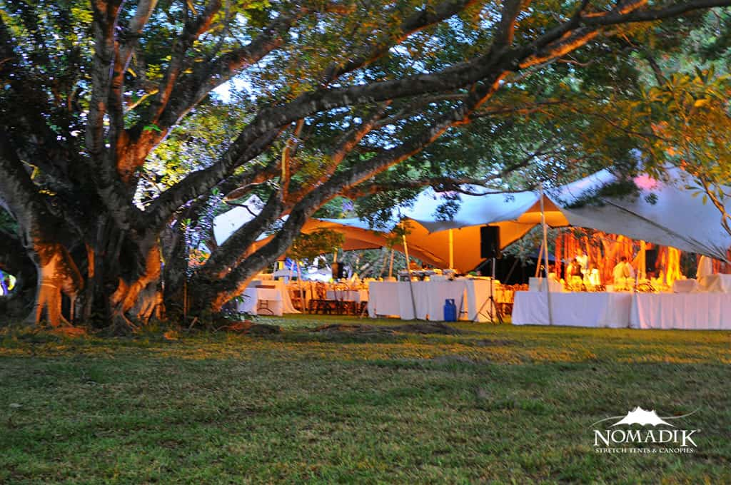Stretch Tent Under A Tree